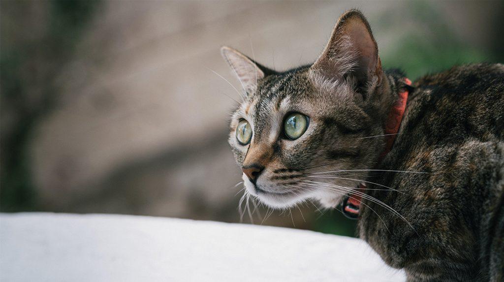 Als het aan deze ecoloog ligt, mogen huiskatten niet meer naar buiten