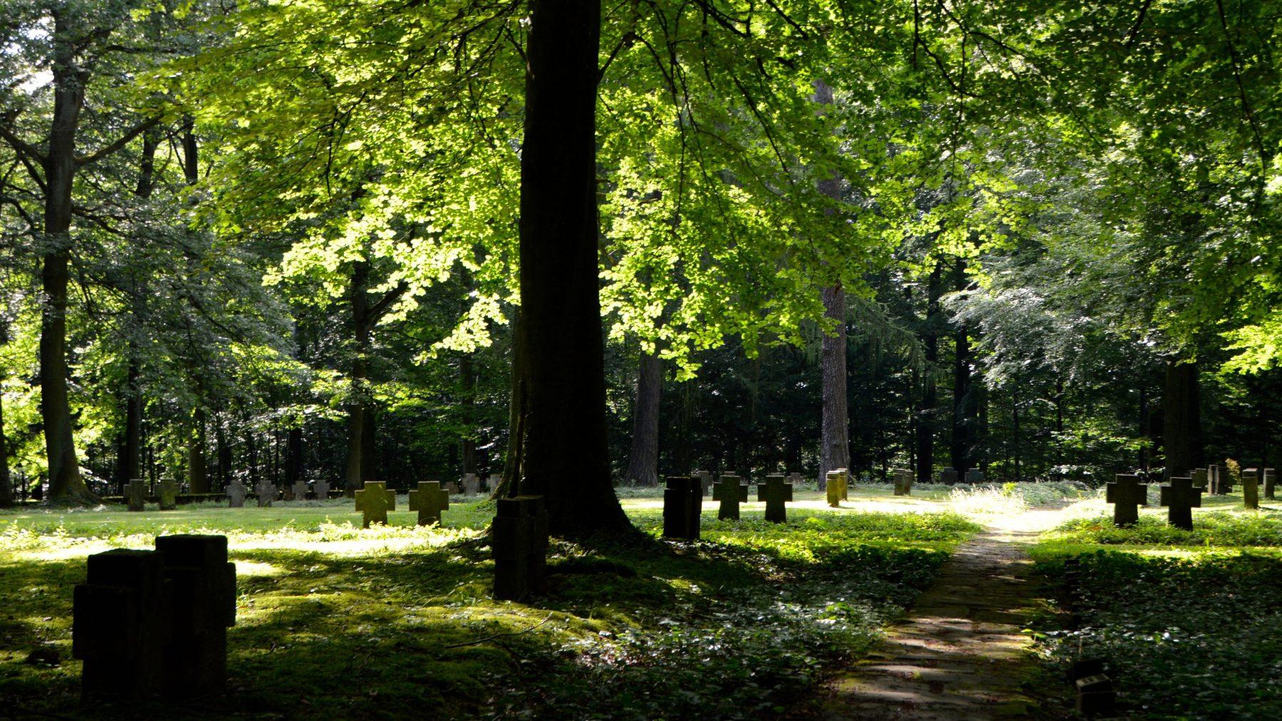 Groen de grond in: x ecologisch verantwoorde opties voor een uitvaart