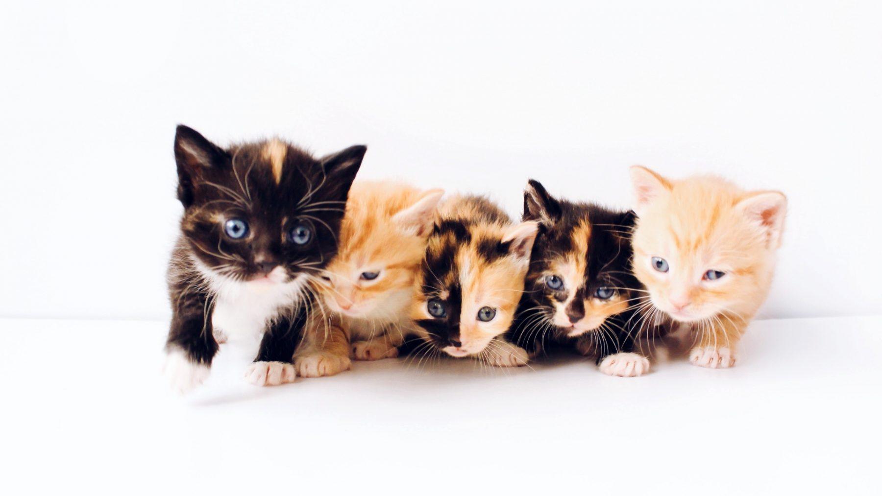 kijken naar schattige dieren is gezond