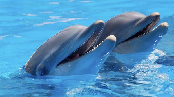 Zeezoogdierenpark Dolfinarium moet zowel dierenverblijven als shows aanpassen