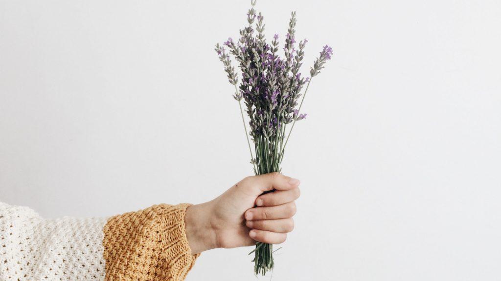 5 x waarom we linea recta een familie aan planten in huis moeten halen