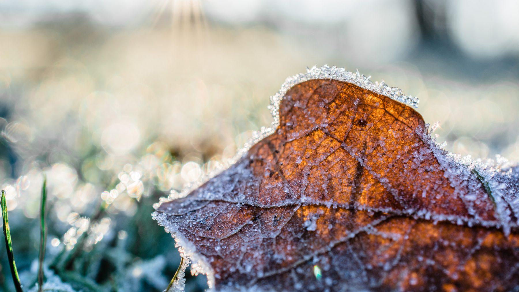 vorst najaar twente gemeten koud winter najaar herfst