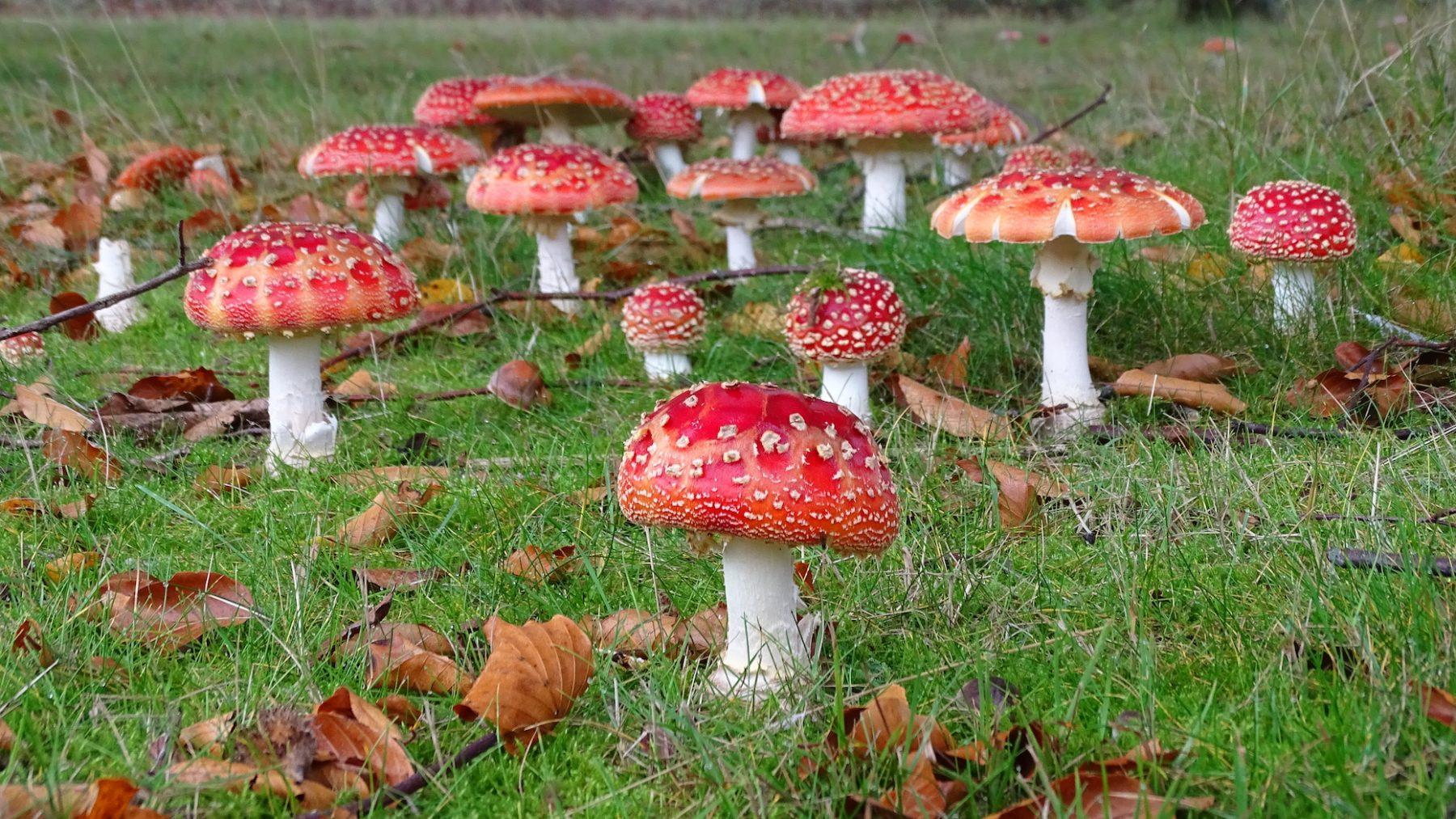 paddenstoelendorp