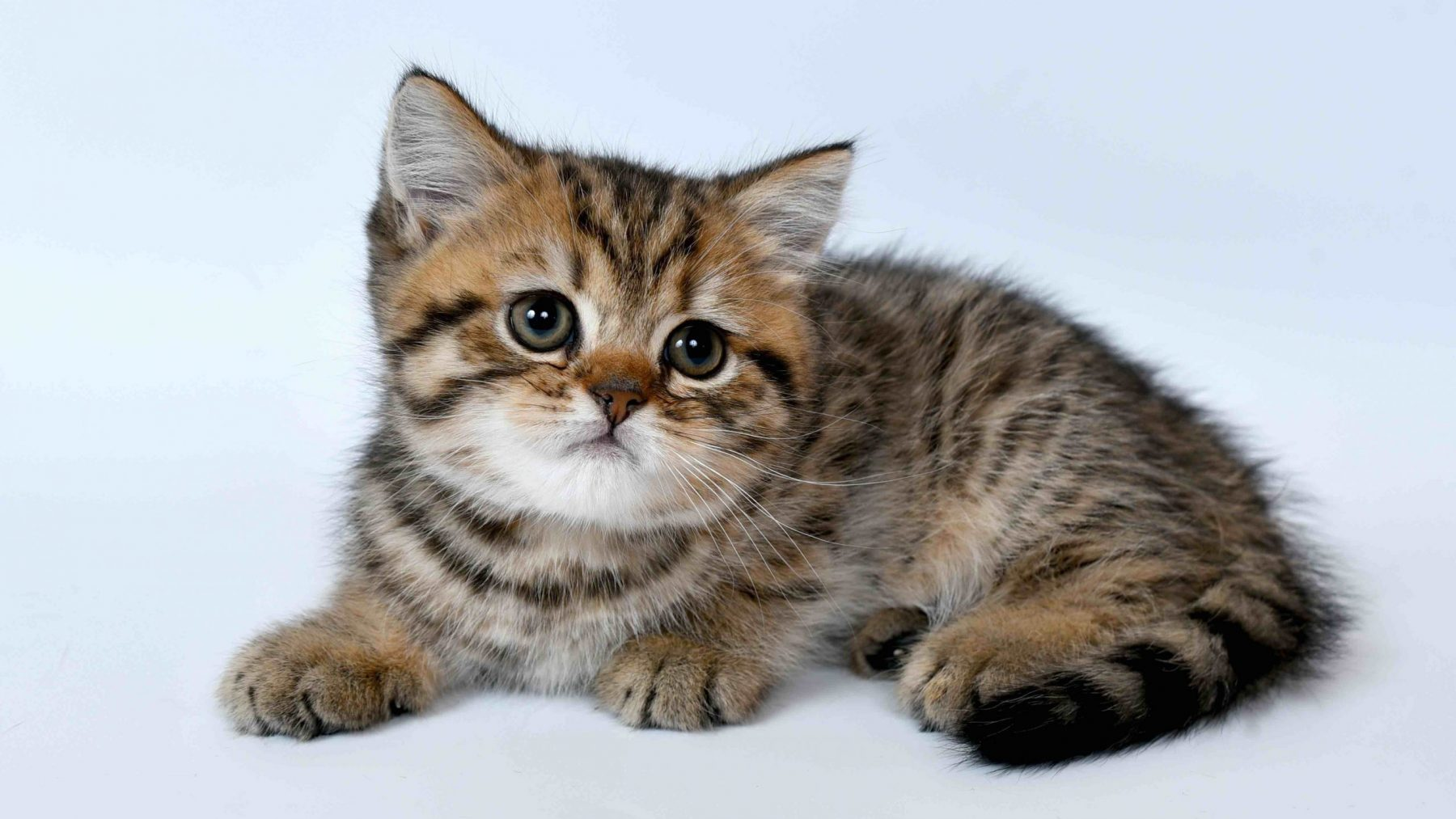 katten-i-love-happy-cats