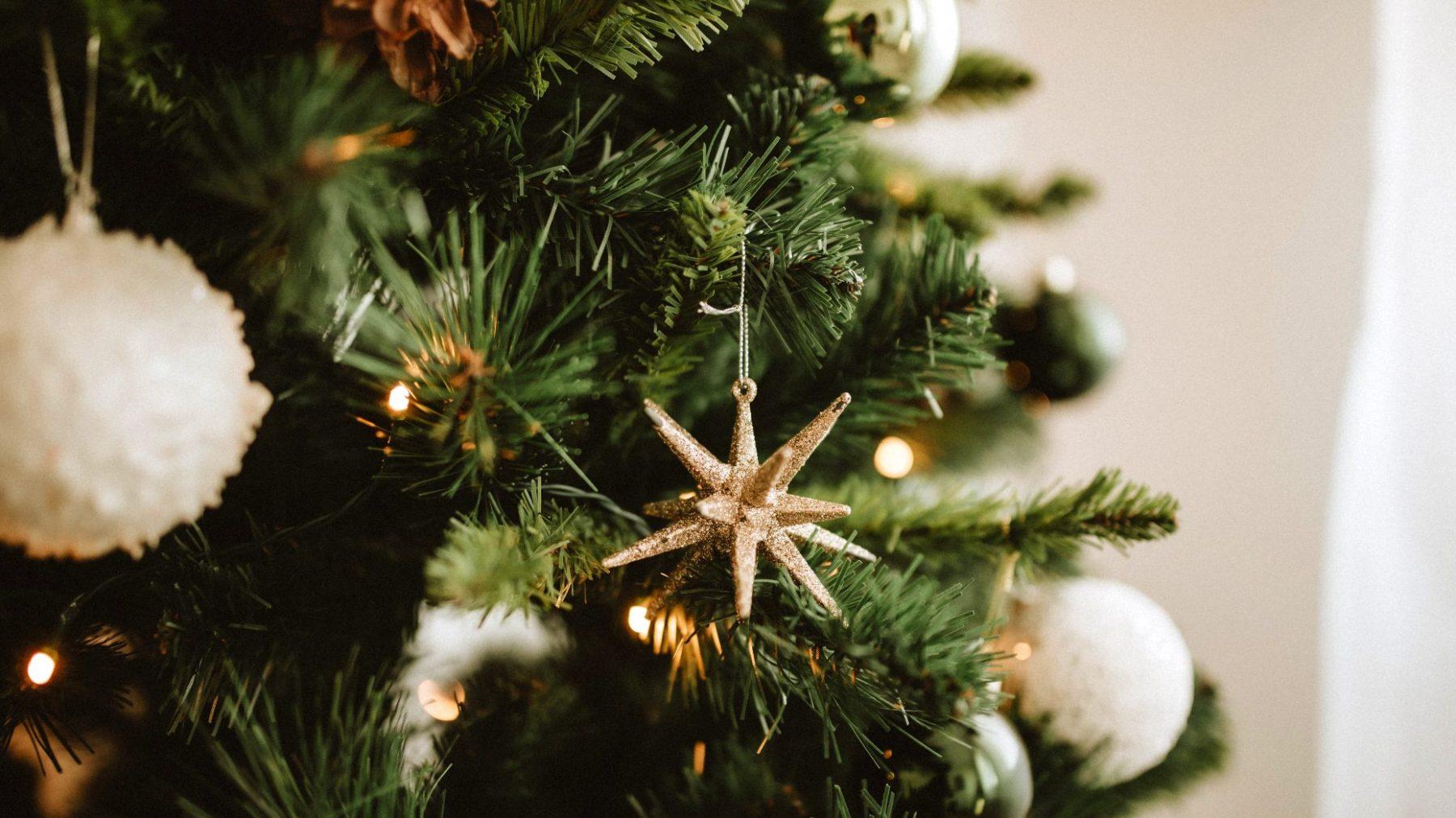 Botanische brouwer Lowlander plant kerstbomenbos en brouwt bier met dennennaalden