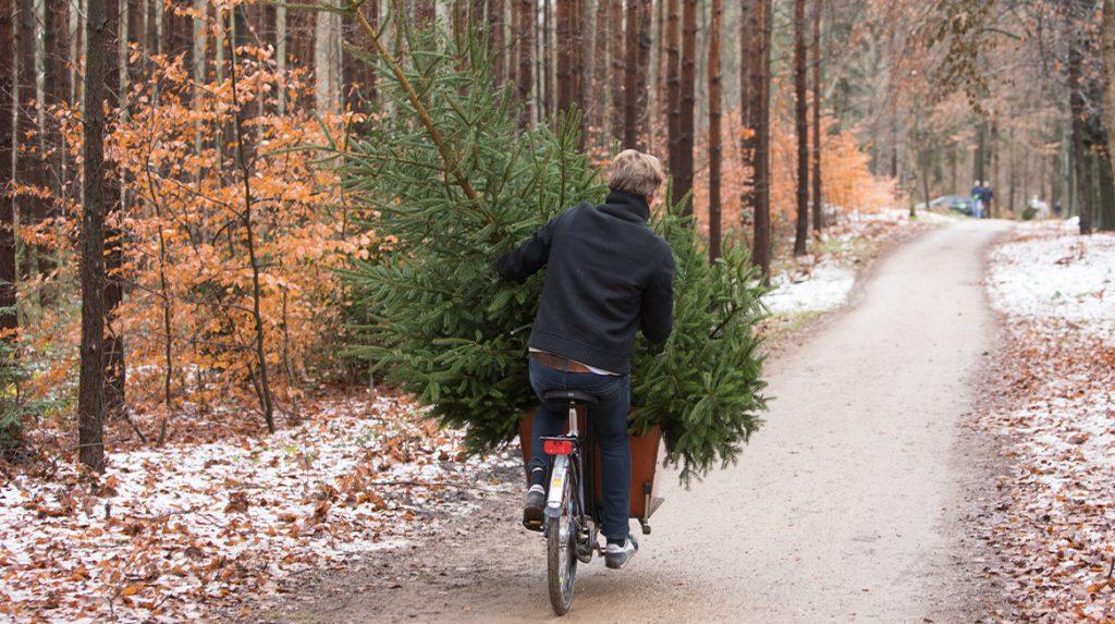 Etiquette-expert over de kerstboom- 'Voor Sinterklaas optuigen_ Dat deed je nóóit'