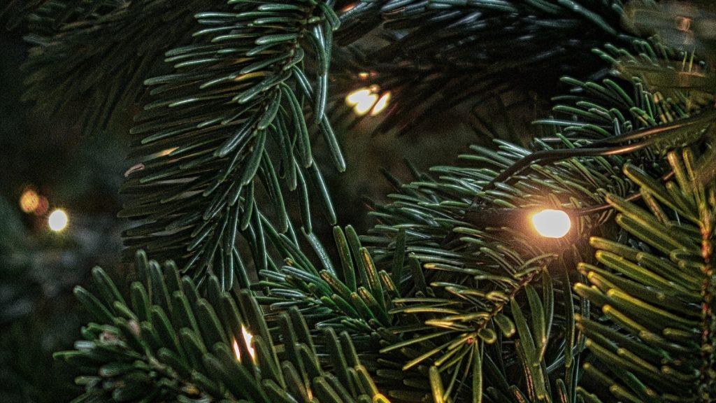 Nep of toch naald handige tips voor een écht duurzame kerstboom
