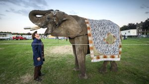 Circusolifant Buba
