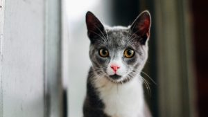 Mi-awh: Concertgebouworkest organiseert concert voor eenzame katten