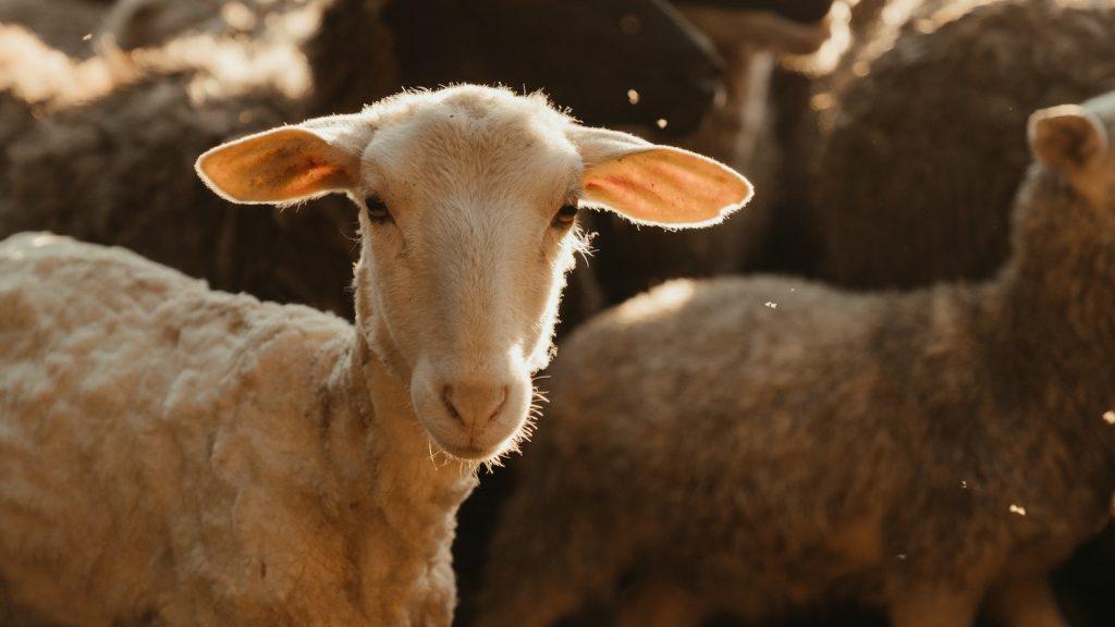 geen mensen maar dieren op cover italiaanse vogue