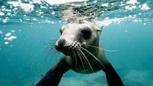 Politie in Zeeland haalt boze zeehond van de weg