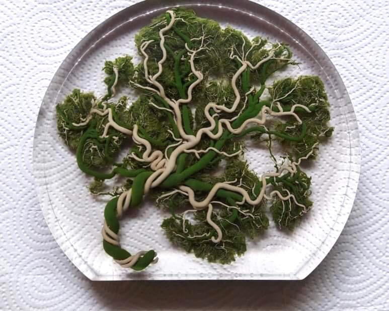 Placenta levensboom groen