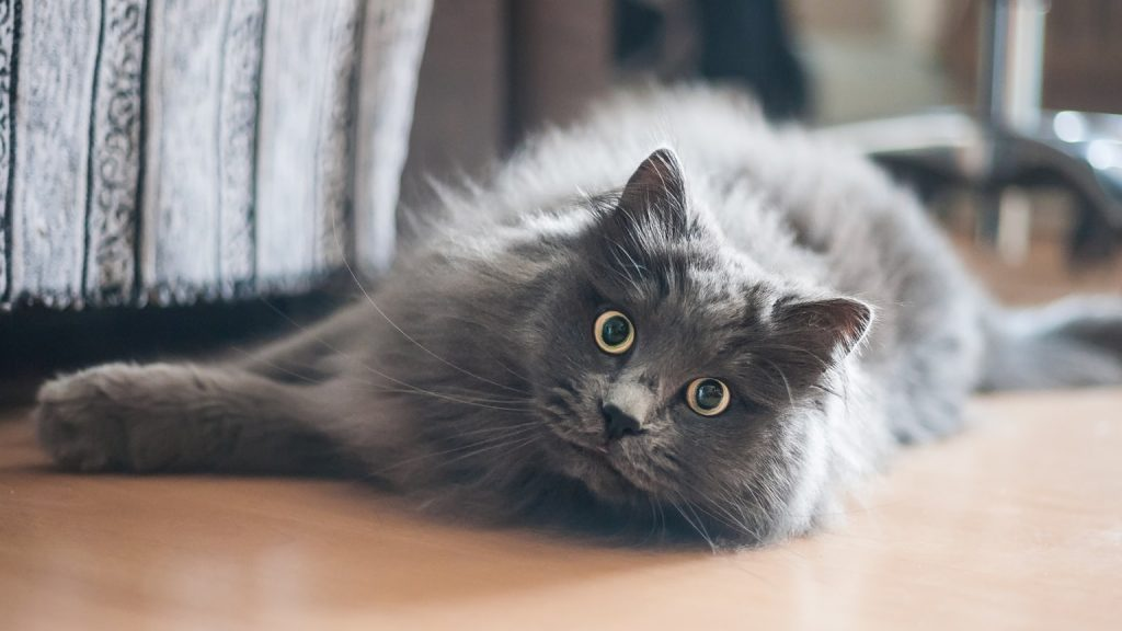 kat na drie jaar terug
