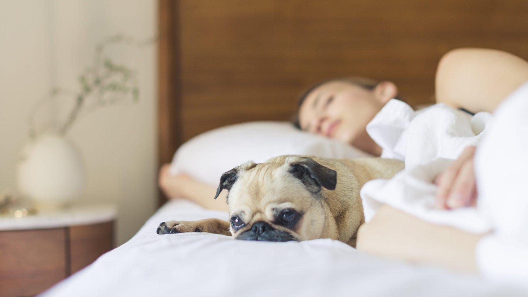 slaapverhalen volwassenen