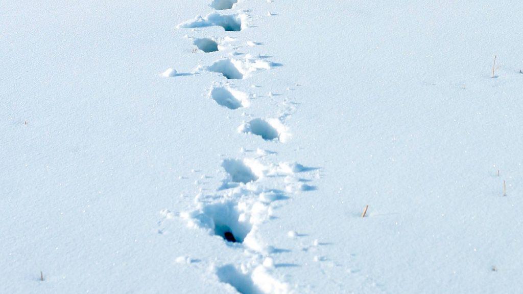 boodschap in de sneeuw in Groningen