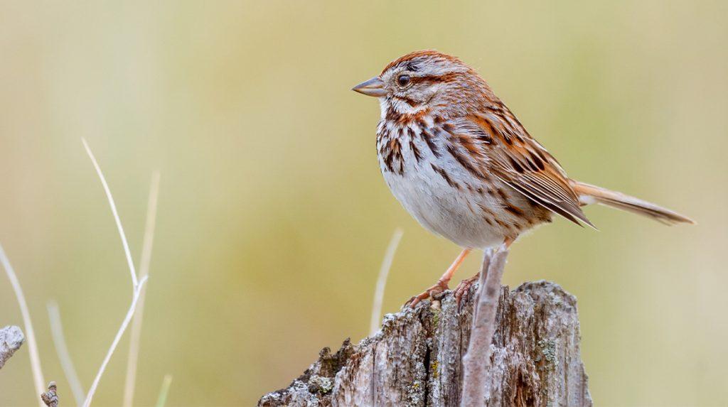 Record aantal aanmeldingen voor Nationale Tuinvogeltelling