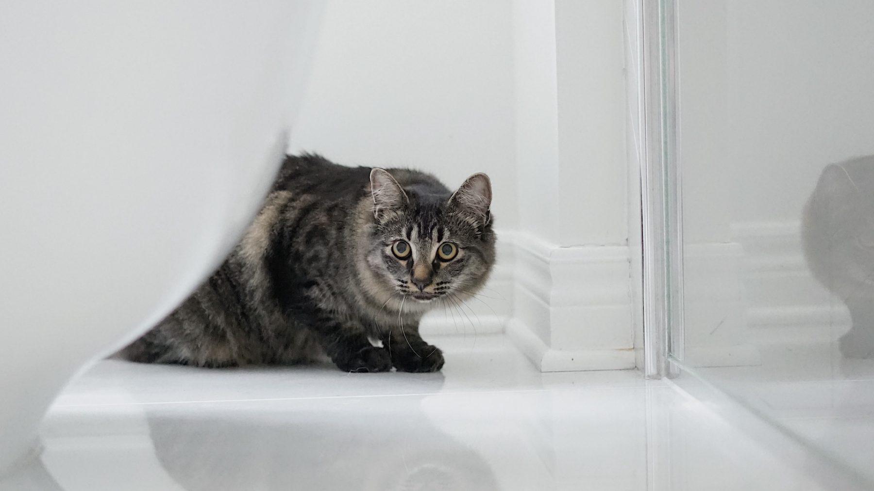 Gaat jouw huisdier ook zo graag mee naar de wc? Dierenarts Vahid legt uit hoe dat komt