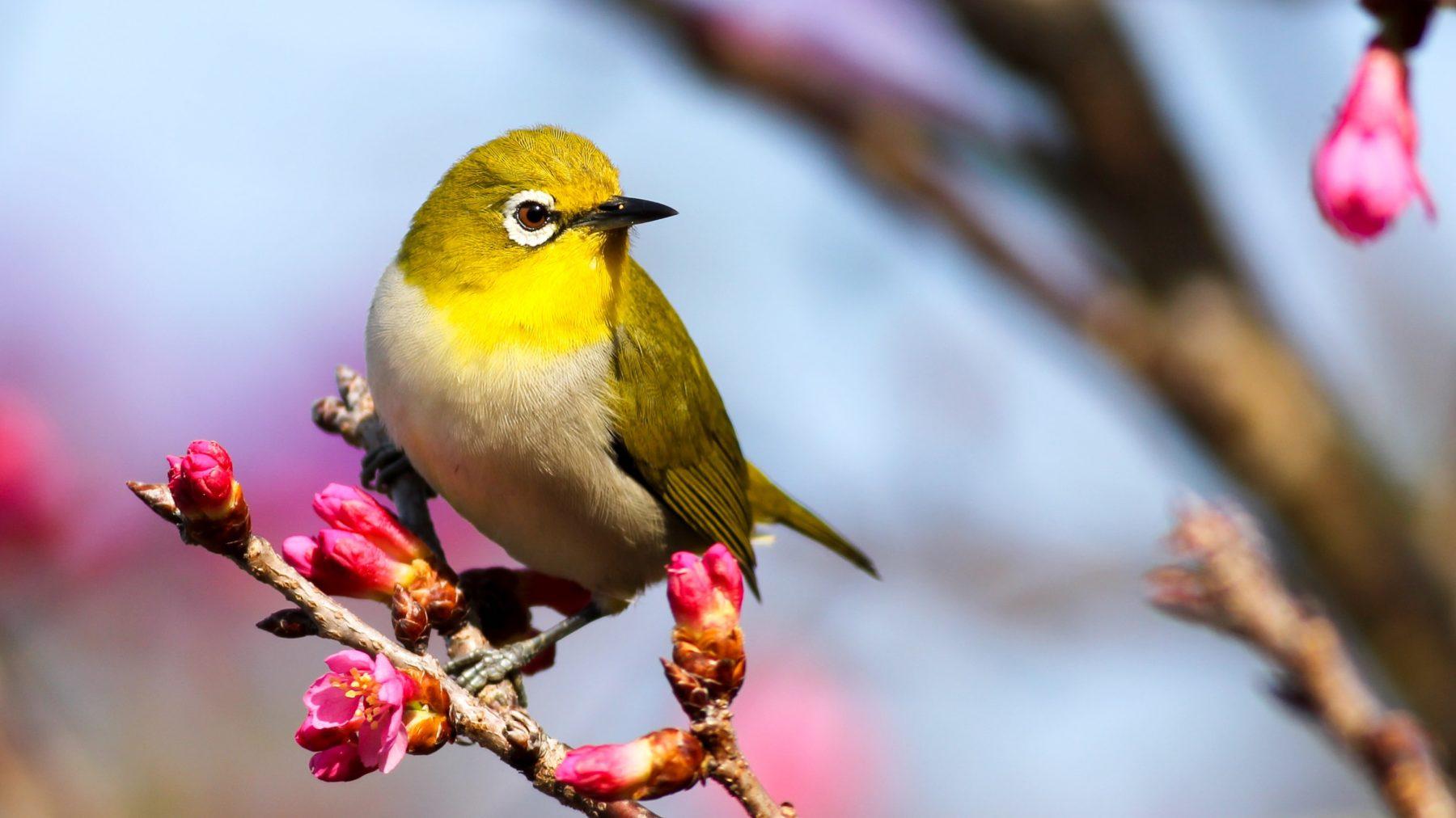 Zó haal je de fluitende vogels naar je tuin (en de poep weg)