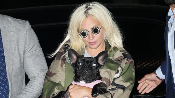 Lady Gaga honden gestolen LA ANP