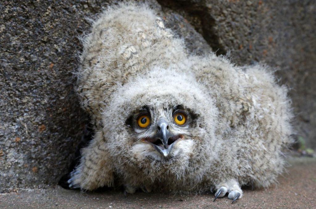 'Big Brother' bij de Vogelbescherming, met uilskuikens en ander jong grut