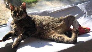 In Arianne's Katshuisch wonen 18 gehandicapten katten