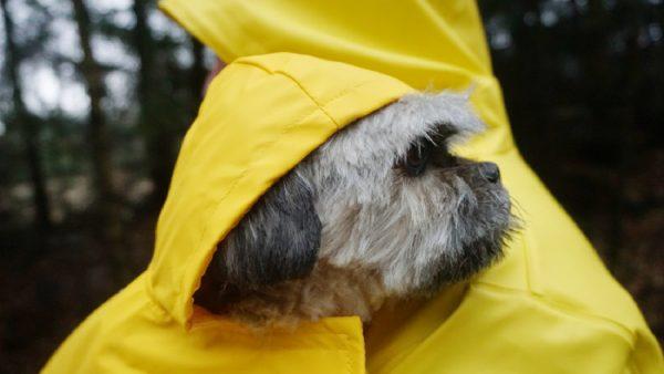 Lidl verkoopt matchende regenjassen