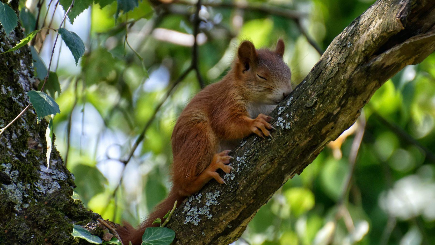 eekhoorntjes overleden bilthoven