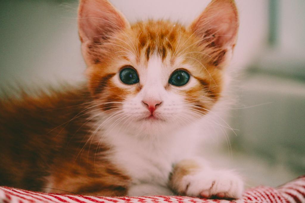 Kitten overgoten met frituurvet
