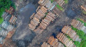 Thumbnail voor Nederland verantwoordelijk voor kappen grote stukken oerwoud in buitenland