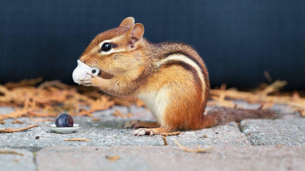 Brigitte heeft de grootste eekhoornopvang van Nederland in haar achtertuin