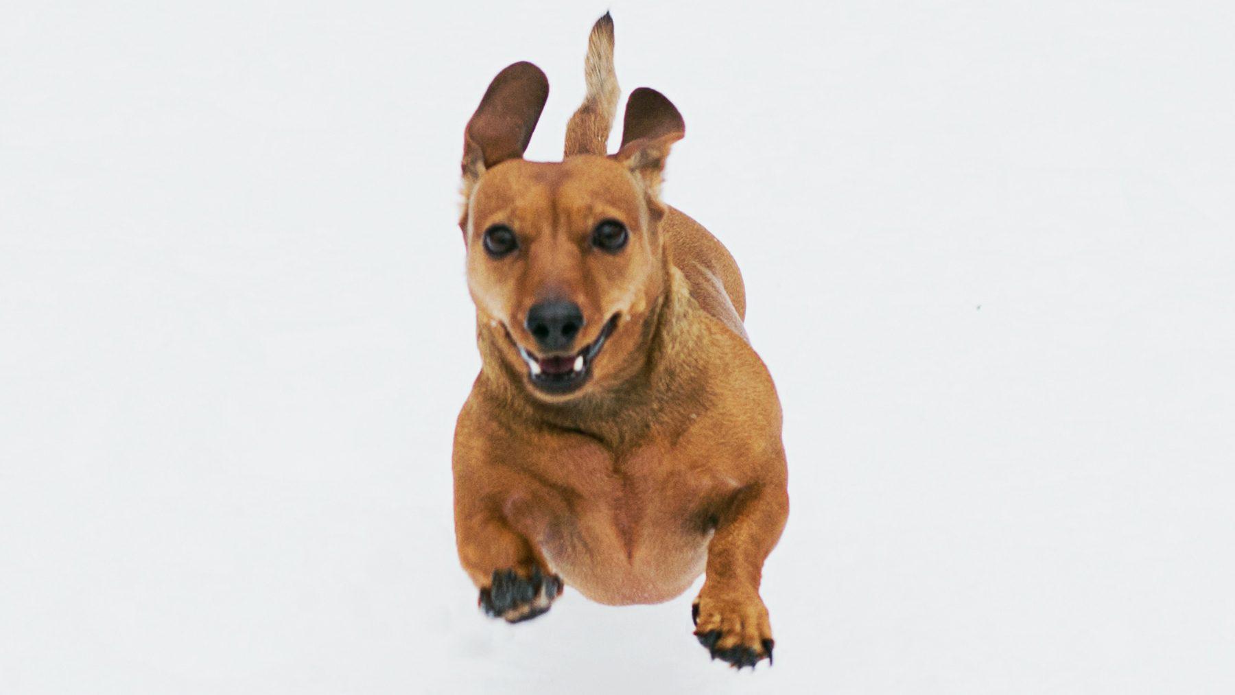 fins onderzoek kleine honden
