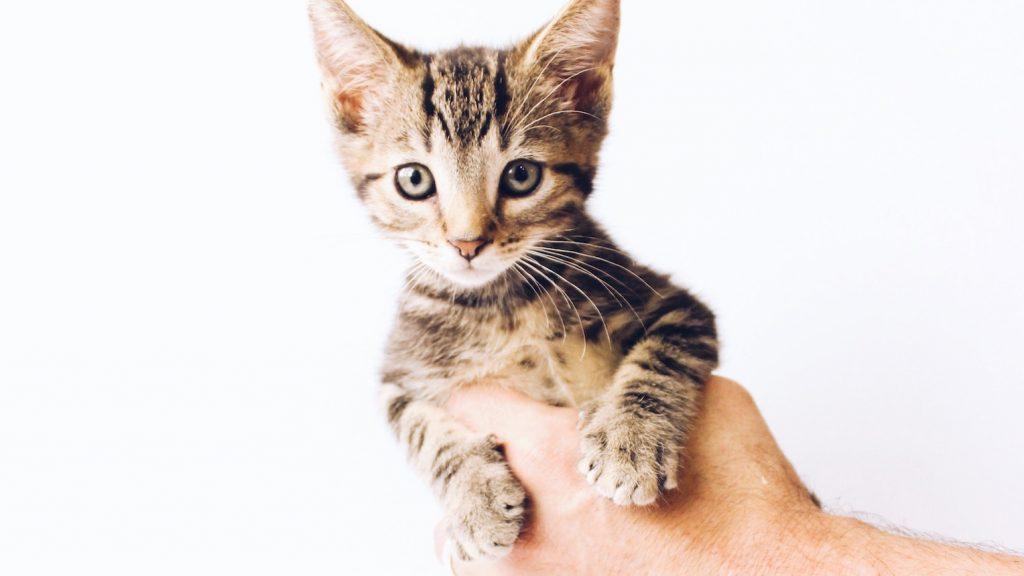 Dierenorganisatie ontdekt 160 postpakketten vol met levende kittens en puppy's