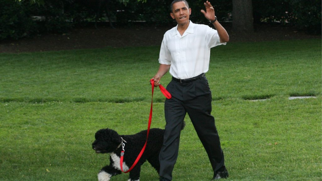 Familie Obama in rouw om voormalig 'first dog' Bo_ 'We gaan hem ontzettend missen'