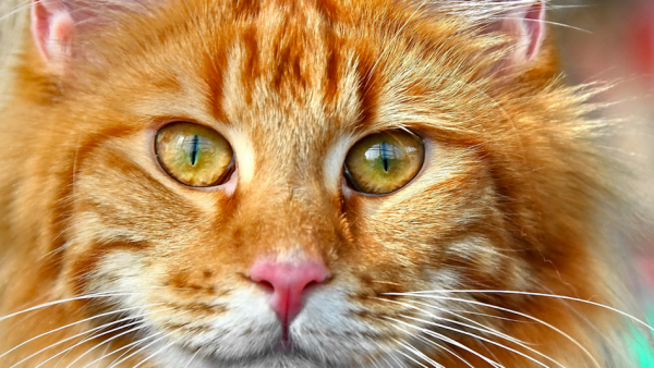 Politiejacht op kattenschieter in Hardinxveld-Giessendam