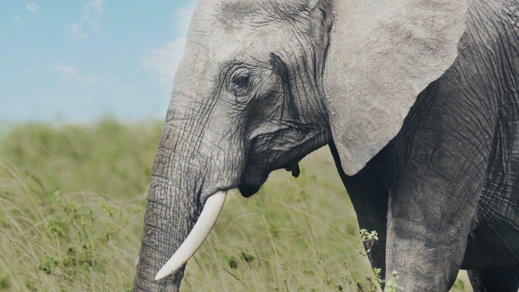 Olifanten in India overleden door bliksem