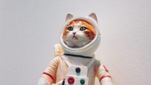 Thumbnail voor Van poppen tot kattenbeeldjes: deze (Funda)huizen houden er wel heel bijzondere collecties op na