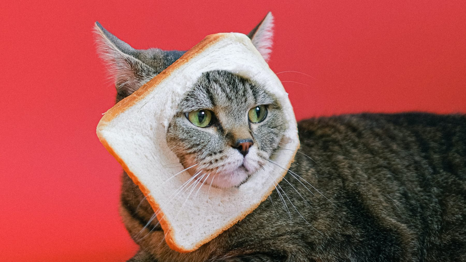 brood-smeren