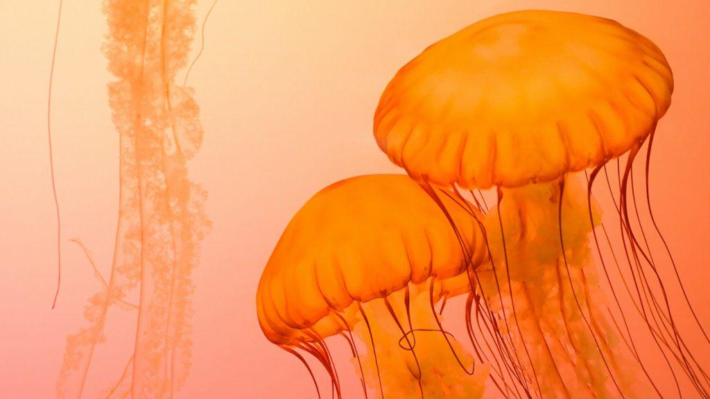 Zandvoort Kwallen soep in Zandvoort_ 'Bizar, echt bergen van kwallen'