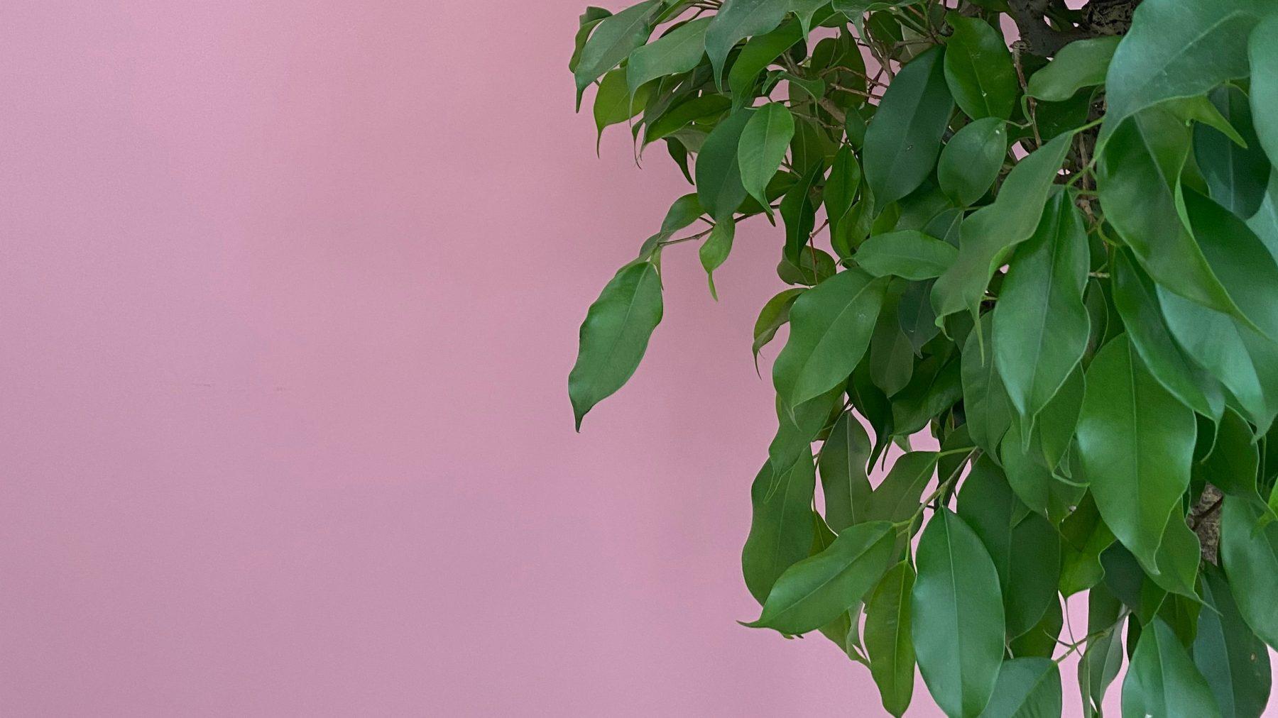 giftige-planten