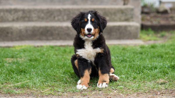 Loslopende hond wil spelen met politie Pexels