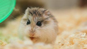 Thumbnail voor Michelle begroef bijna haar nog levende hamster: 'De bloemetjes waren al geplukt'