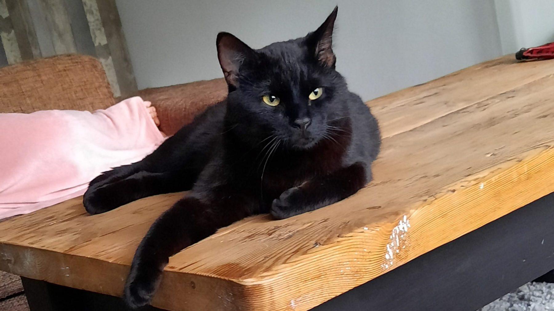 Savannah overgoot haar kat met kokend water: 'Voelde me zo schuldig'