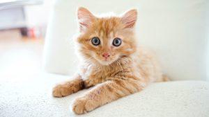 Thumbnail voor Michelle haalt een tweede kat in huis: 'Bedplassers, aparte kamers en ontevreden vriend'