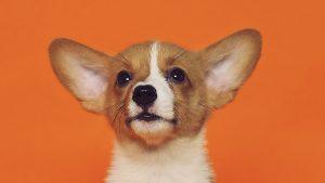 Thumbnail voor Dierfluencer? Deze Nederlandse huisdieren hebben minstens 100.000 volgers op Instagram