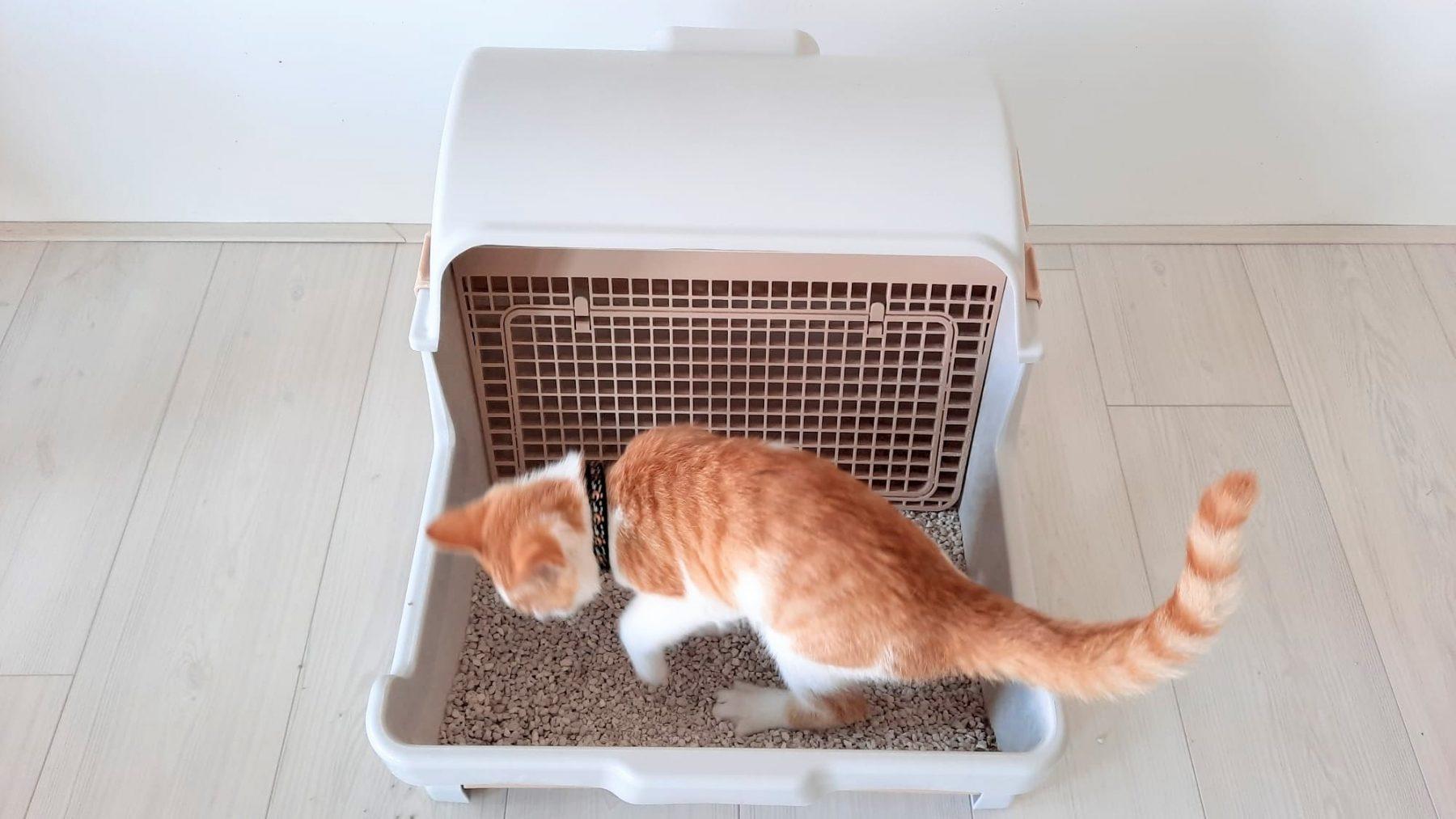 zelfreinigende-kattenbak