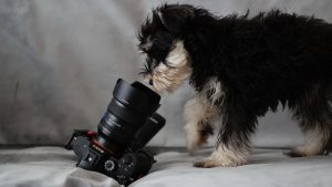 Thumbnail voor De huisdieren van deze BN'ers hebben een eigen Instagramkanaal