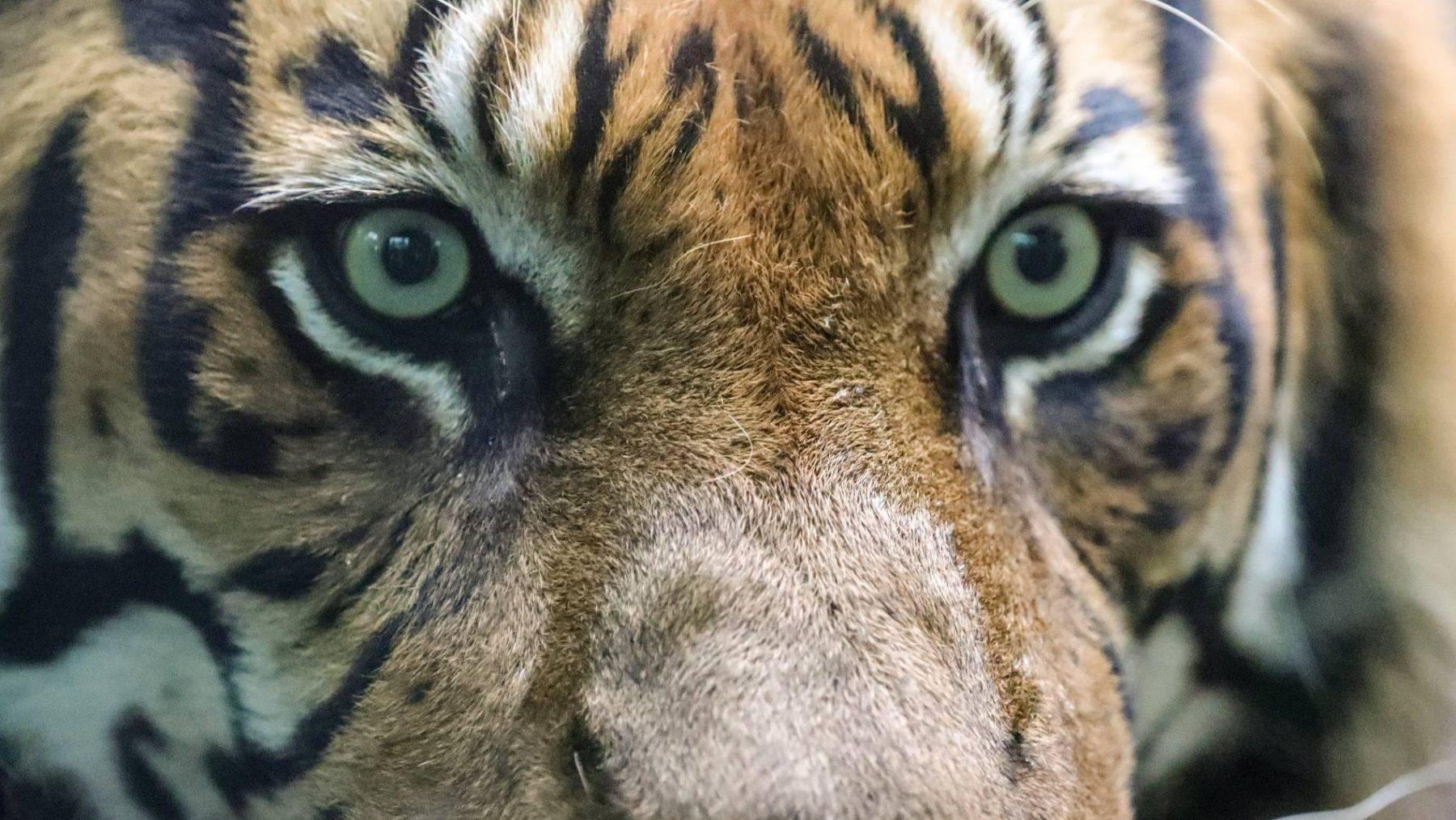 Dierenverzorger uit Netflix-hit Tiger King dood gevonden