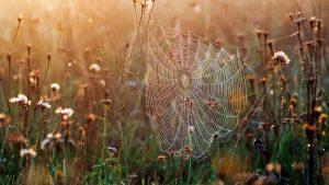 Miniatura di settembre del ragno: ecco come tenere lontani i crawler