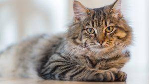 Thumbnail voor 3 x bijzondere verhalen over katten: 'Ons huis ging in vlammen op'