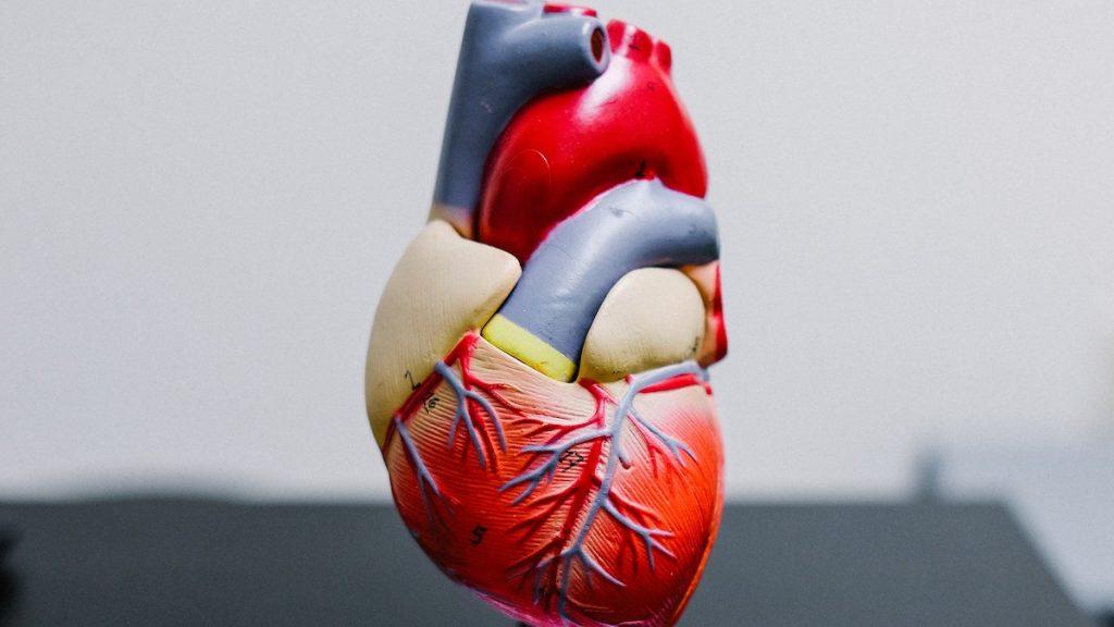Bijna 5 miljoen Nederlanders geven toestemming voor orgaandonatie